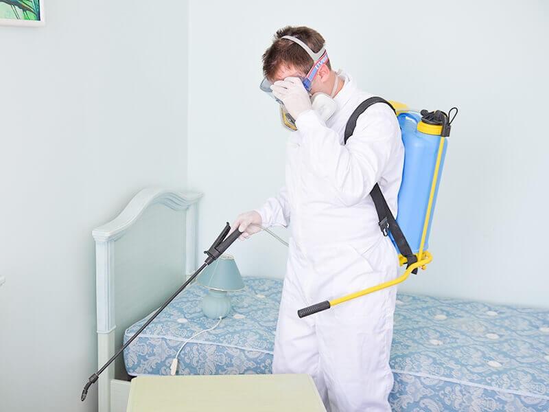 Peruse The Top 6 Unique Techniques to Improve Pest Control