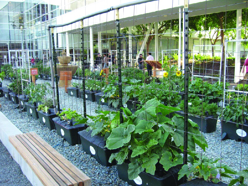 Dry spell Tolerant Landscape Promotes an Eco-accommodating